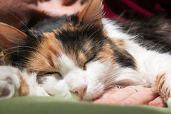 Deep Cat Sleep Royalty Free Stock Photos