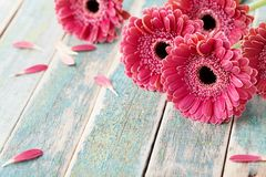Deep color bouquet from beautiful gerbera daisy flowers on vintage wooden background. Greeting card for mother or womans day. stock images