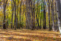Deep in colorful autumn forest in November, Bratislava, Slovakia stock photo