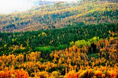 Deep colourful forest with many colours in autumn Stock Photography