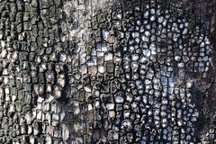Deep contrast and rich texture close-up of tree bark Royalty Free Stock Images