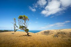 Tree on coastal hill Stock Photo