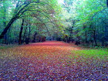 Deep Czech Autumn Forest Royalty Free Stock Images