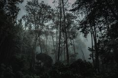 Deep in the dark amazon jungle stock images