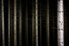 Deep Dark Forest. Tree trunks in an eerie dark forest Stock Photos