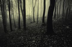 Deep dark forest with mysterious fog royalty free stock image