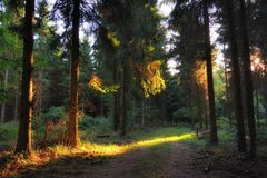 Deep and dark forest road with sunlight in early autumn Royalty Free Stock Photos