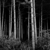 Deep Dark Woods Royalty Free Stock Image