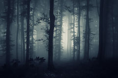 Deep dark woods with creepy fog Stock Photography
