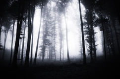 Deep dark woods on Halloween. Deep dark woods with mysterious fog at night on Halloween royalty free stock photography