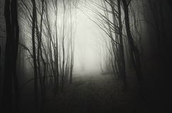 Deep dark woods with mysterious fog at night royalty free stock photography