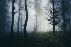 Deep dark woods with thick fog stock photography