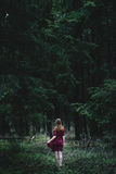 Deep dark woods. Travel to the woods begins here for Her Stock Images