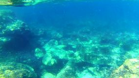 Deep Dives Action Cam stock footage