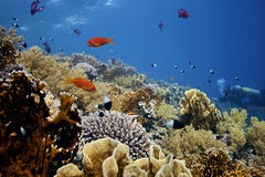 Deep Coral-Reef with fishes around Royalty Free Stock Photo