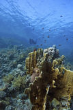 Deep Doral-Reef with fishes around Royalty Free Stock Image