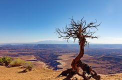 Deep erosion in the Grand Canyon with dead tree in forefront. Grand Canyon with deep cuts and dead tree in forefront stock images