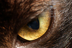 Deep into the eye of cat. A very sharp and detailed snap on the eye of cat revealing the beauty inside the eye. The first impression of looking at the image is Stock Images