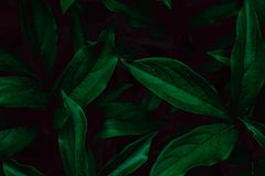 Deep faded green leaves background. Creative layout. royalty free stock photography