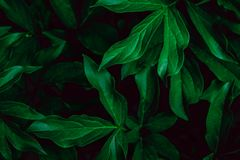 Deep faded green leaves background. Creative layout. stock photos