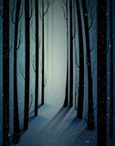 Deep fairy frosty winter forest with mistery light, shadows, sullen winter forest, scared cold frosty woods,. Vector vector illustration