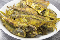 Deep Fired Fish with Curry Powder Closeup Royalty Free Stock Photos