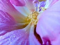 Deep flower stock photography