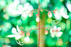 Deep focus small white flower  with green light bokeh spring nat Stock Photo
