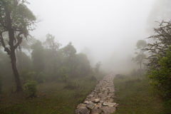 Deep fog Stock Photography