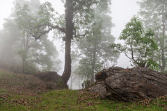 Deep fog Stock Images