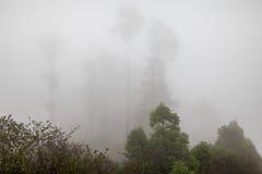Deep fog Royalty Free Stock Photography