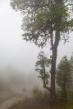 Deep fog Stock Photo