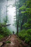 Deep fog in the forest Royalty Free Stock Images
