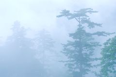 Deep fog in natural woodland. Royalty Free Stock Photography