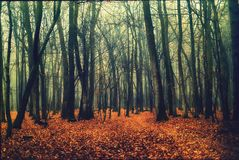 Deep into the fogy forest. Deep into the fogy autumn forest royalty free stock photography