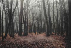 Deep into the fogy forest. Deep into the dark fogy forest stock photos