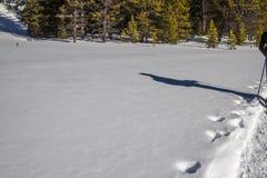 Shadow of man snowshoeing through fresh, white snow stock image