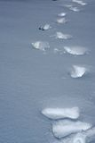 Deep footprints create a vertical trail in fresh snow Stock Image