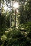 Deep forest. In the austrian alps, zillertal Royalty Free Stock Photos