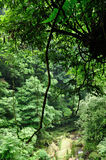 Deep forest. Landscape photo。in bifengxia yaan China Stock Photo