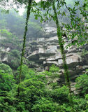 Deep forest. Landscape photo。in bifengxia yaan China Stock Images
