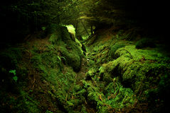 Deep Forest Royalty Free Stock Photo