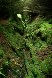 Deep Forest stock photo