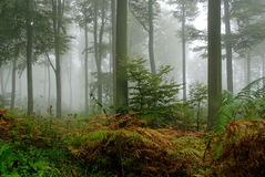 Deep forest Royalty Free Stock Images