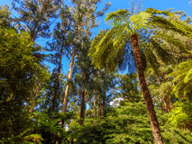Deep forest in Alfred Nicholas gardens 2 Stock Photography