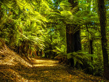 Deep forest in Alfred Nicholas gardens 3 Royalty Free Stock Images