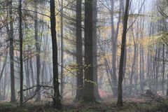 In deep forest background picture Stock Photography
