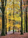 In deep forest background picture Royalty Free Stock Photos