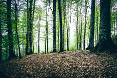 Deep Forest beautiful landscape foggy moody weather Stock Photo