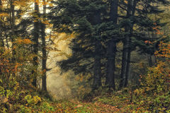 Deep forest Stock Photography